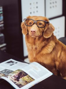 Dog in glasses in front of magazine